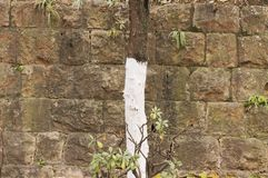 Isolated painted tree and brick wall background royalty free stock images