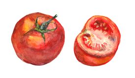 Isolated painting of tomato and half Stock Images