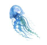 Isolated pale color tender jellyfish Stock Photos