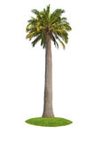 Isolated Palm