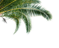 Isolated Palm Leaves on white background Stock Photography
