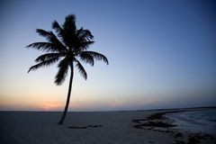 Isolated Palm Tree in the Bahamian Sunset Royalty Free Stock Image