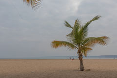Isolated palm tree on the beach. Royalty Free Stock Images