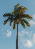 Isolated Palm Tree in the summer Stock Photography