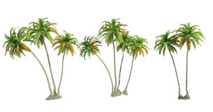 Isolated palm trees Royalty Free Stock Photo