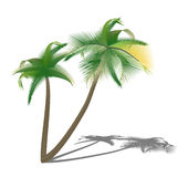 Isolated palm trees with shade Stock Photography