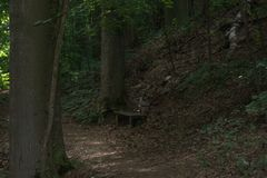 Isolated park bench in the middle of a forest and surrounded by large trees. With a forest path passing in front of it, a steep wooded slope above and behind Royalty Free Stock Photography