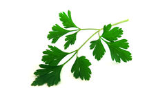 Isolated parsley. Fresh parsley leaves isolated over white background royalty free stock photos