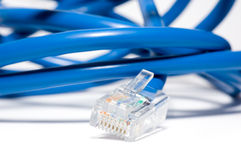 Isolated Patch Cord Stock Photo