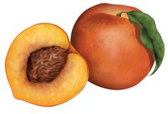 Isolated peaches. Single peach and cross section isolated over white background vector illustration