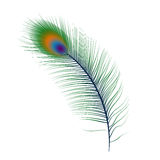 Isolated peacock feather Royalty Free Stock Photos