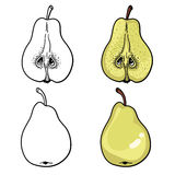 Isolated pears. Graphic stylized drawing. Vector illustration. Stock Photography