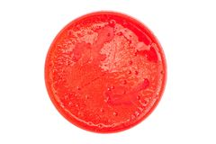 Isolated petri dish. Petri dish with red medium, bacteria and yeast colonies growing, isolated on a white background Royalty Free Stock Photos