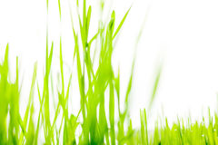 Isolated photo of fresh green grass Stock Photos