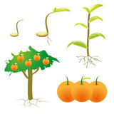Isolated picture. Chart growth plant Royalty Free Stock Photo
