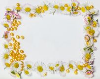 Isolated picture frame with marguerite border Royalty Free Stock Image