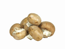 Isolated brown edible mushrooms Royalty Free Stock Photo