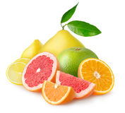 Isolated pile of citrus fruits royalty free stock images