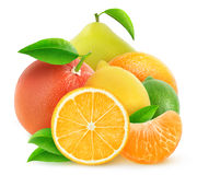Isolated pile of citrus fruits Stock Images