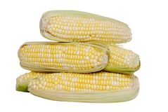 Isolated Pile Of Sweet Corn Stock Images
