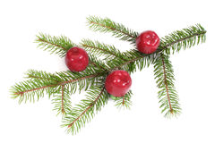 Isolated pine branch Royalty Free Stock Photo