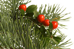 Isolated pine branch with berries. Christmas decoration Stock Image