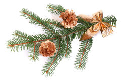 Isolated pine branch with cones Stock Images