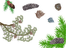 Isolated pine branches and cones collection Royalty Free Stock Photos