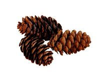 Isolated Pine Cones Royalty Free Stock Photo