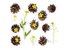 Isolated pine cones and flowers royalty free stock photos