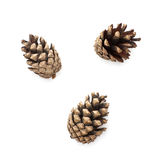 Isolated pine cones royalty free stock image