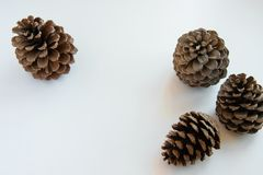Isolated pine cones on white background, seasonal holiday background/concept. Space for text royalty free stock photo