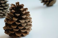 Isolated pine cones on white background, seasonal holiday background/concept. Space for text royalty free stock photography