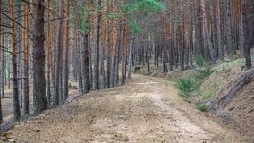 Isolated pine tree forest and track Stock Photo