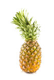 Isolated pineapple Stock Photography