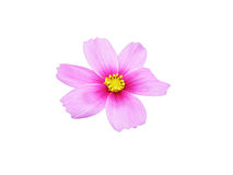 Isolated pink flower Royalty Free Stock Images