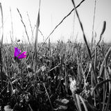 Isolated pink flower. An isolated pink flower against black and white grass Stock Photos