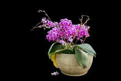 Isolated pink flowers in a flowerpot royalty free stock photography