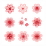 Isolated pink flowers set Stock Photo