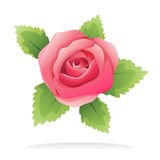 Isolated pink rose. Illustrated pink rose on white with green leaves, romantic design element for events and love subjects Royalty Free Stock Photo