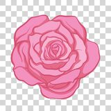 Isolated pink rose flower. Stock vector illustration. Stock Photography