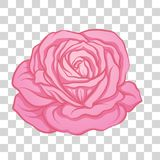 Isolated pink rose flower. Stock vector illustration. Stock Photos