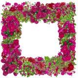 Isolated pink roses photo frame Stock Photo