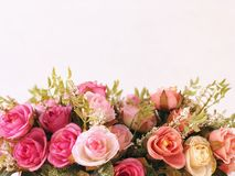 Isolated pink and white roses with white background. Surprise on valentine's day. Copy space for greeting card , invitations card. Wedding ceremony Royalty Free Stock Images