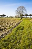 Isolated plane tree in a plowed field - (Tuscany countryside - I Royalty Free Stock Photography