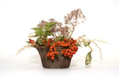 Isolated plant. Autumn decorated plant with white background Royalty Free Stock Image