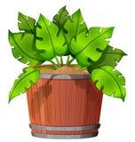 Isolated plant in pot. Illustration stock illustration
