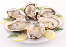 Isolated plate of oyster Royalty Free Stock Images
