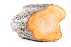 Isolated plum tree stub log Royalty Free Stock Image