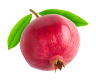One pomegranate stock images